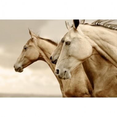 INVERTIDO Sepia Horses